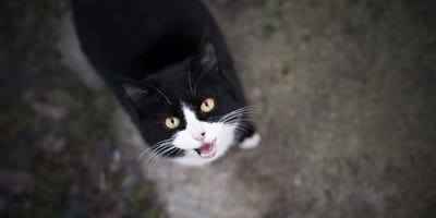 Che nome dare al gatto? Ecco come fare la scelta giusta