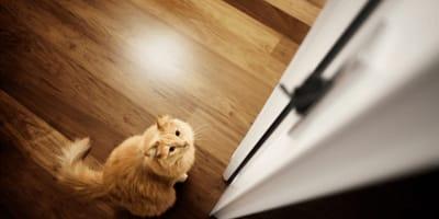 Warum können Katzen geschlossene Türen nicht leiden?