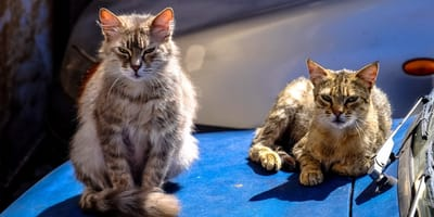 adulto mayor pide ayuda para sus quince gatos