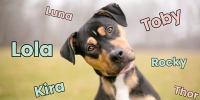 ¿Cómo elegir el nombre de tu perro? Trucos para escoger el mejor