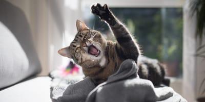Perché il mio gatto è aggressivo?