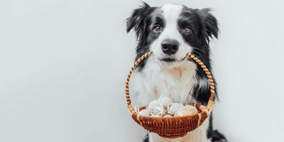 Gekochte Eier neben Hundenapf