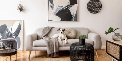 33 razze di cani da appartamento per fare la scelta migliore