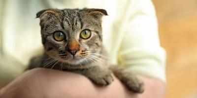 ¿Dónde puedo adoptar un gato en Bogotá?
