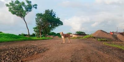 Perro en zona rural