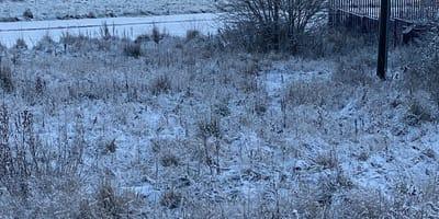 Trawa pokryta śniegiem.