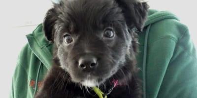 """""""Der erste Corona-Hund"""": Feivels Schicksal verbreitet sich wie ein Lauffeuer"""