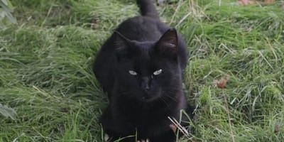 gato negro en adopcion madrid