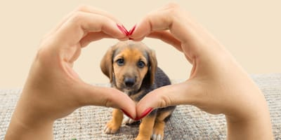 hands in shape of heart around puppy's face