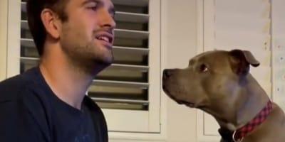 Pitbull denkt, er ist unsichtbar, und dreht komplett am Rad (Video)