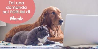cane-e-gatto-al-computer-per-il-forum-di-wamiz-italia