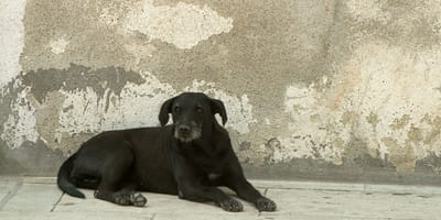 Perro callejero en México