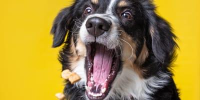Qual è il miglior cibo per cani? Le regole per scegliere