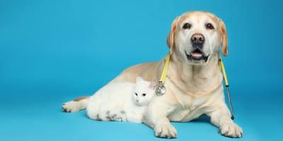 Come funzionano gli esami di laboratorio di cane e gatto?