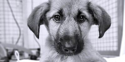 """""""Byłem taki słodki…, a  teraz nie żyję"""" -  list pożegnalny szczeniaka wstrząsa internautów"""