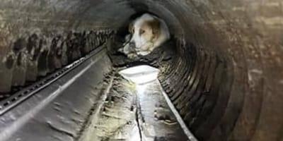 Pies ratowany ze studzienki