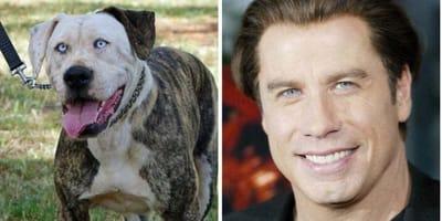 11 zdjęć psów, które wyglądają jak sobowtóry gwiazd Hollywood