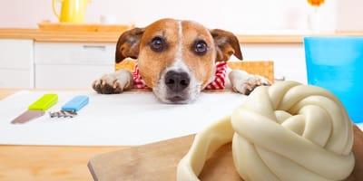 Los perros pueden comer queso, ¿sí o no?