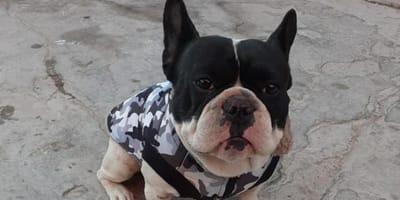 Desesperado, hombre de Ciudad Juárez ofrece su coche a cambio de su perrito