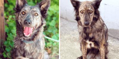 Prima e dopo l'abbandono: la cagnolina è avvilita (Video)