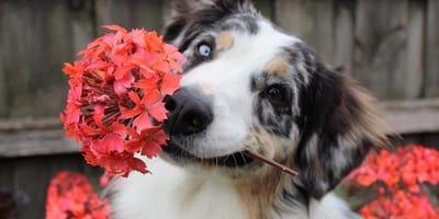 Ecco a cosa fare attenzione nel mese di aprile se hai un cane