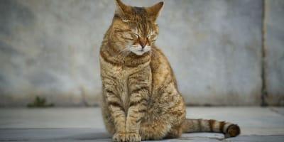 Cosa fare in caso di Calicivirus del gatto? Sintomi e cura