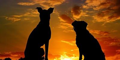 cani e cielo