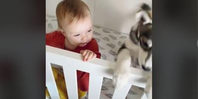 neonata-con-cucciolo-di-husky-nella-culla
