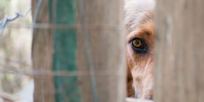Desidia en la Patagonia: dejan morir a un perro enfermo y atado