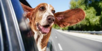 5 'apps' para transportar mascotas en Chile