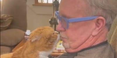 Rote Katze küsst älteren Mann