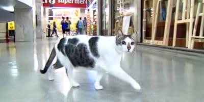 Katze in Einkaufszentrum