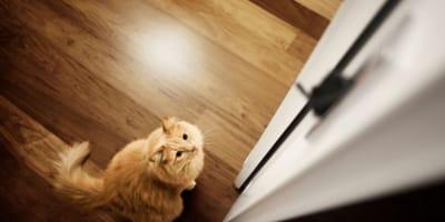 Svelato il mistero del perché i gatti odiano le porte chiuse