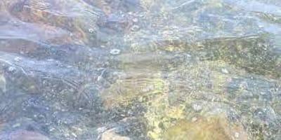 Pies bawi się w wodzie, gdy opiekun zauważa przerażający cień i nieruchomieje