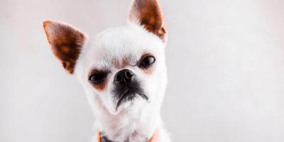 A cara de perro: significado de la expresión