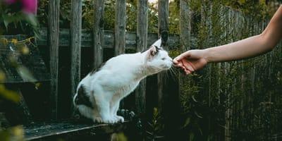 Kot przyjmuje smakołyk