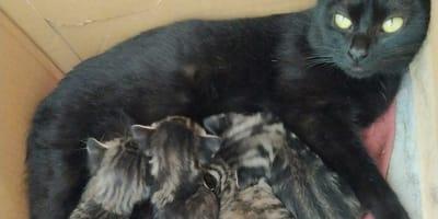 Gatitos y su mami se quedan sin adopción en Galicia: el motivo te dejará sin palabras
