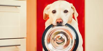 Vier goldene Regeln für die artgerechte Ernährung von Hunden