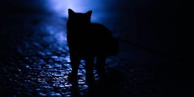 Katze kommt nicht nach Hause: Warum und was tun?