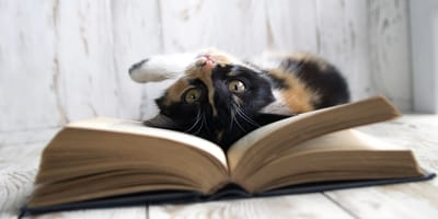 Gato jugando con un libro