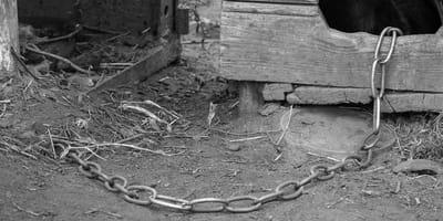 Málaga: Una cadena de hierro esconde una historia que no deja a nadie indiferente