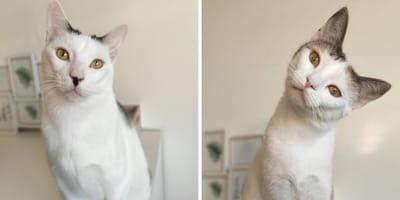 Afina la vista, ¡no son la misma gatita! Son Abril e Isis y su historia te hará llorar de impotencia