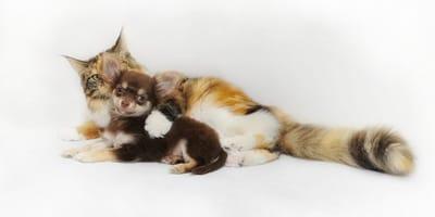 QRO: Perros y gatitos de escasos recursos esperan tu donativo para ser esterilizados