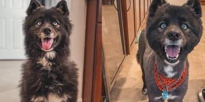 10 najgorszych psich fryzur zgotowanych psom przez opiekunów w czasie kwarantanny