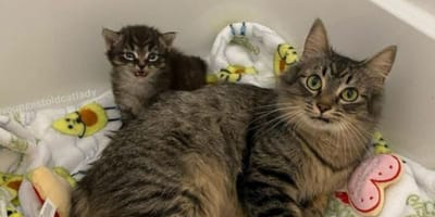 Cat won't let anyone near her sick kitten, but amazing volunteer finds a way