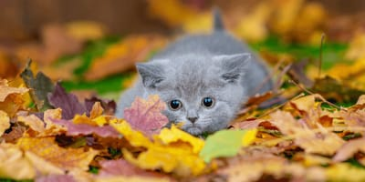 Herbstkatzen: Sind sie besser als ihr Ruf?