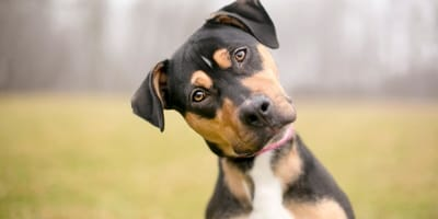 Trucos para escoger el nombre de tu perro
