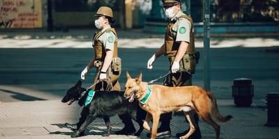 Perro policía olfatea a una persona