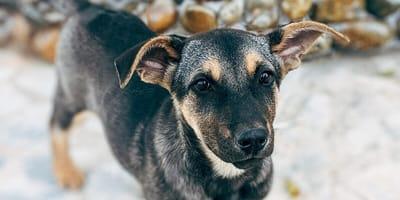 SPL: Cada vez más gente lleva a sacrificar a sus perros y gatos
