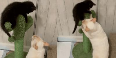 Three black kittens look to camera